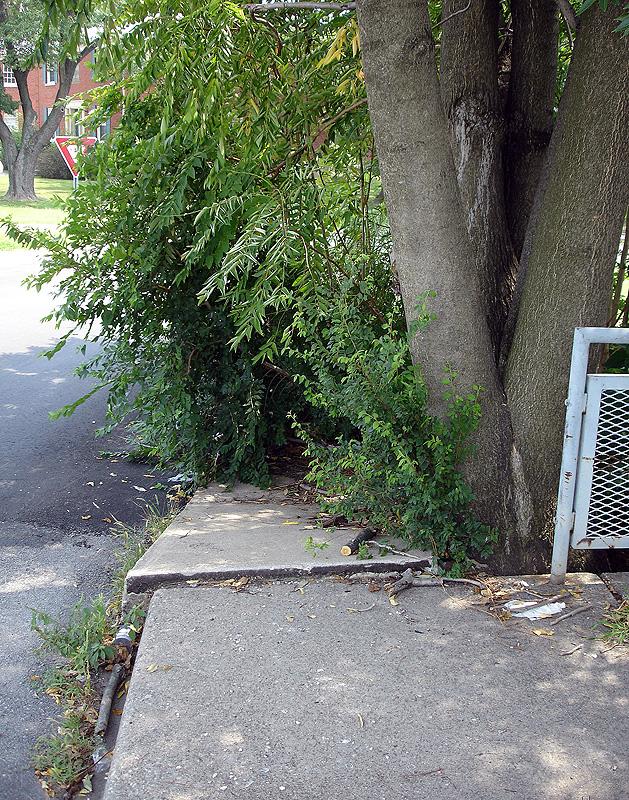Dysfunctional sidewalk on Eastern Parkway.