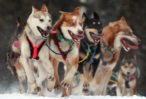 Iditarod Dog Race - Bronson Quon