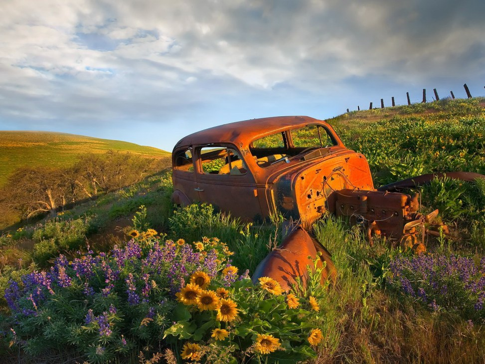 junk-car-flowers