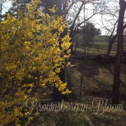 Brownsboro in Bloom