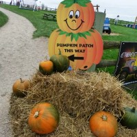 pumpkin patch directions