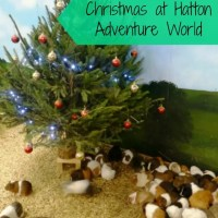 guinea pigs christmas tree at hatton