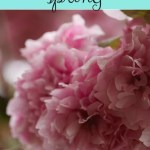 Signs of spring – my joys of spring