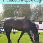 Lambourn open day – meet the horses family fun