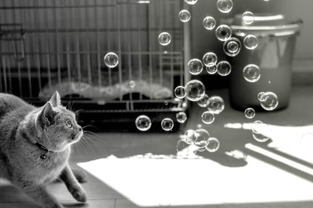 cat-1198232_1920