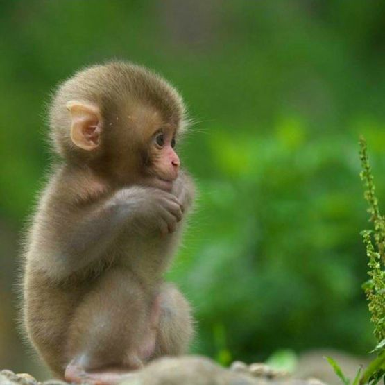 Cute Baby Animal Pictures Wallpapers Cute Monkey Trending On Twitter