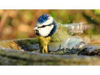 Garden Birdwatching