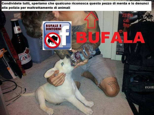 BUFALA - Ragazzo fa bere alcolici al cane.
