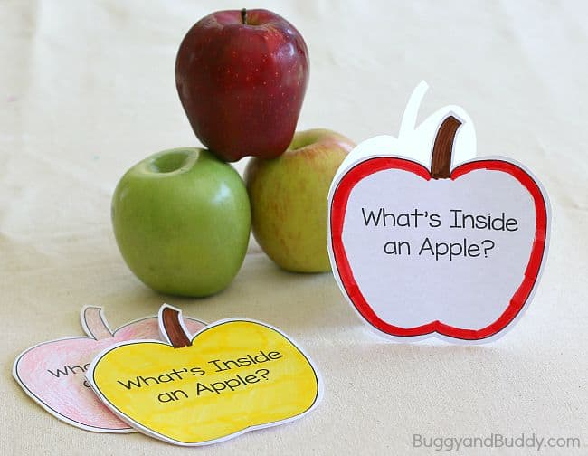 Apple Science for Kids Exploring the Inside of an Apple - Buggy and