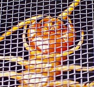Giant Centipede (Scolopendra heros), Temple. Texas--ventral anterior