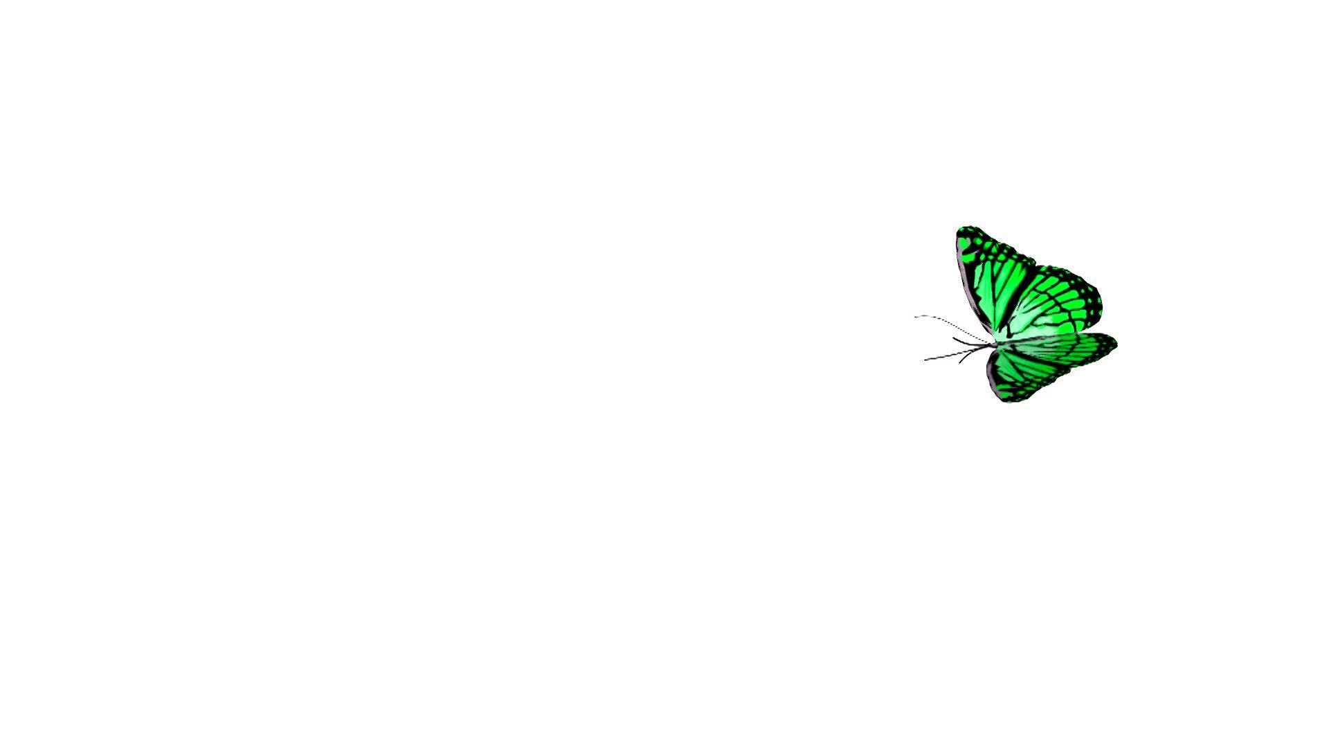 Flying Butterfly Animated Butterfly Animation 4 Royalty Free Video And Stock Footage