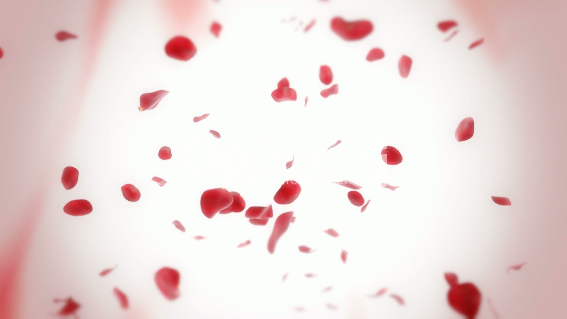 Free Fall Color Wallpaper Falling Rose Petals Looped Animation Royalty Free Video