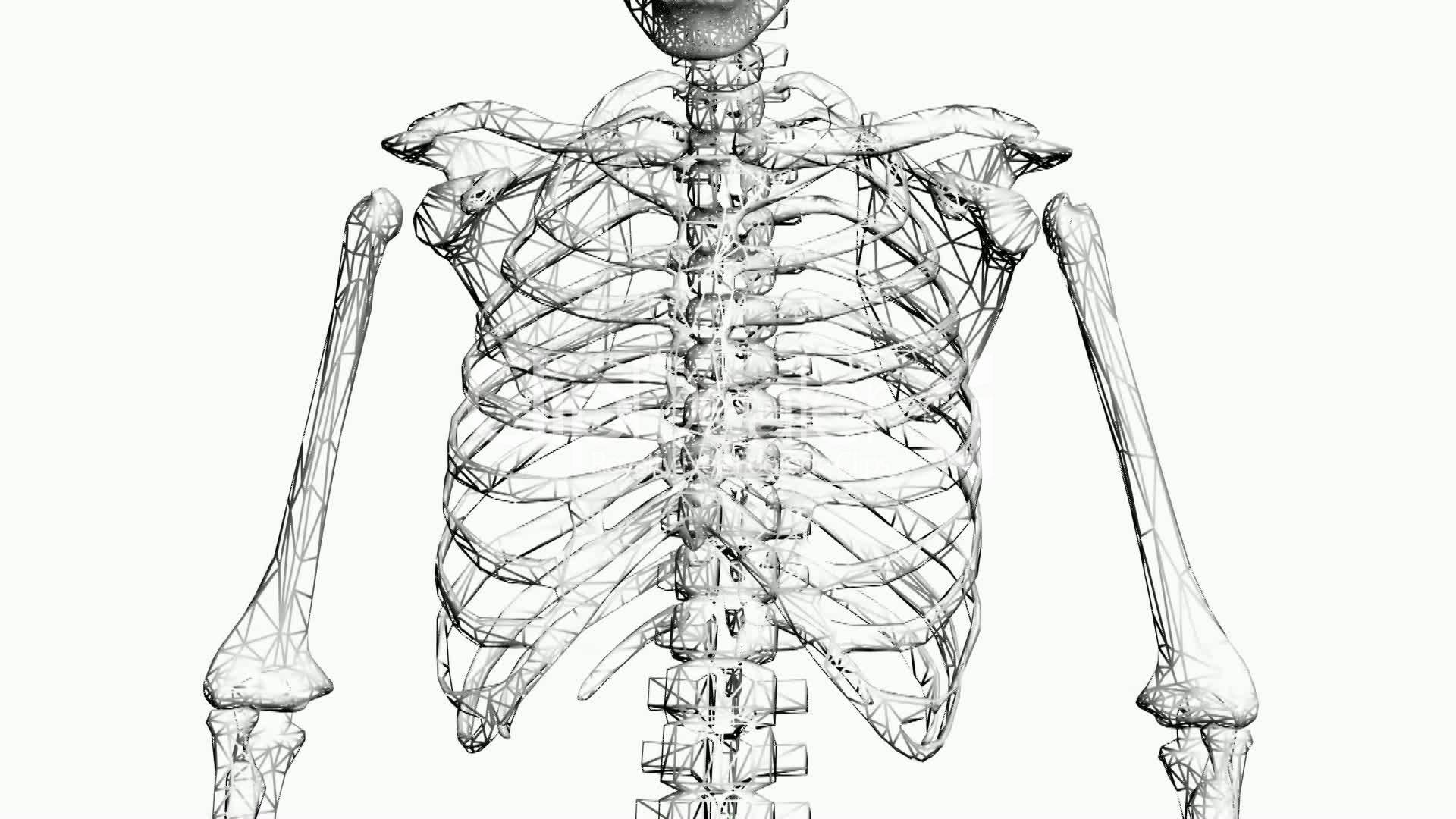 about anatomy human anatomy diagram picture
