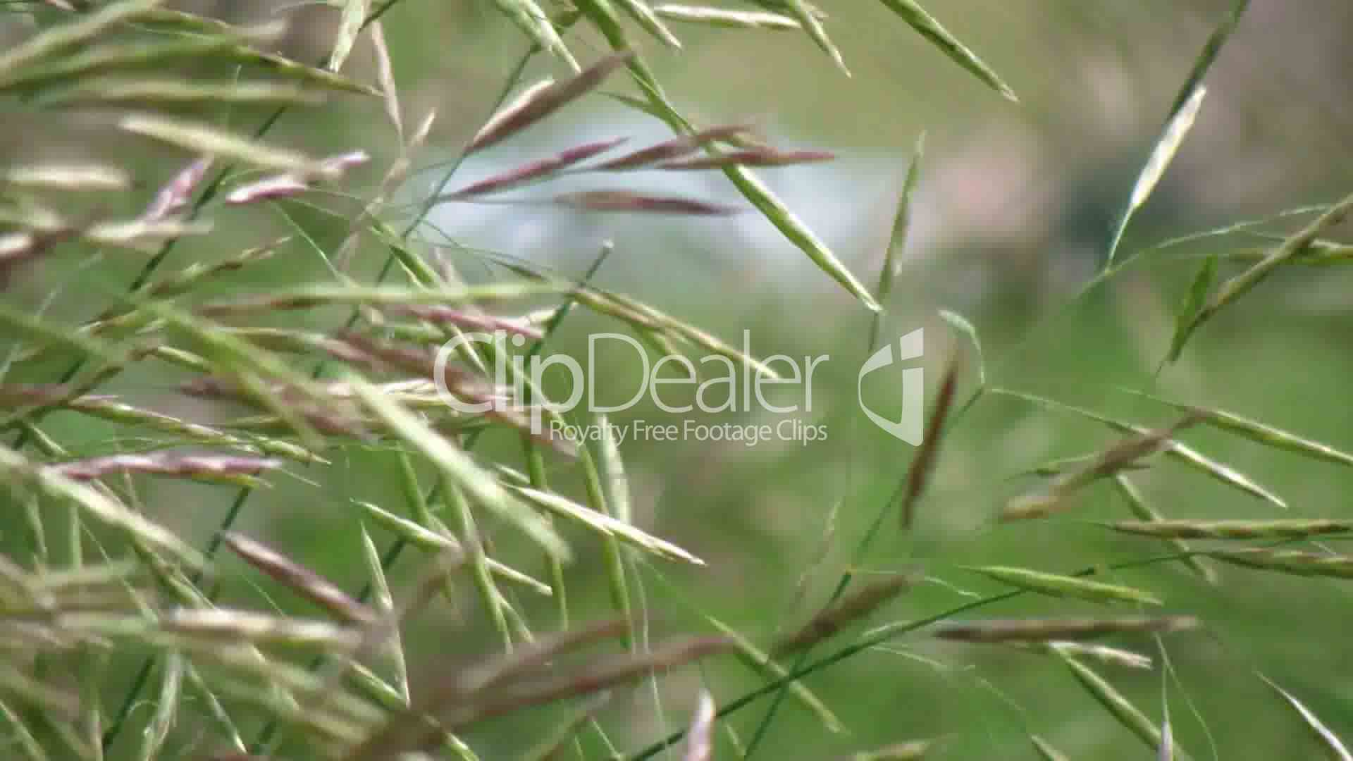 Hd Christbaumschmuck Royalty Free Video And Stock Footage Blades Of Grass Hd Royalty Free Video And Stock Footage
