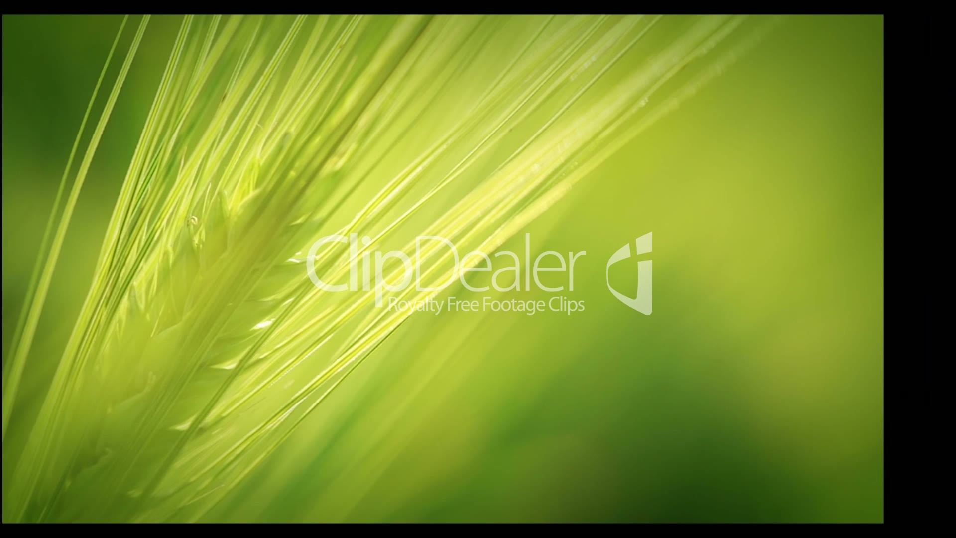 Hd Christbaumschmuck Royalty Free Video And Stock Footage Agriculture Cereal Crops Harvesting Hd Montage Royalty
