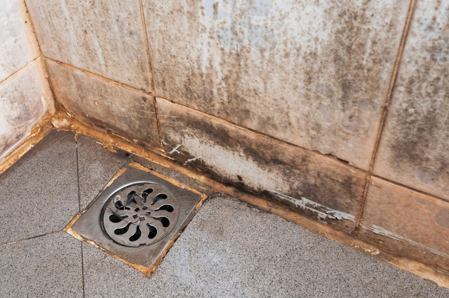 Schimmel Douche Top 7 Places Where Toxic Mold Lives In Your Home