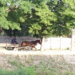 Horse-drawn carts are still a common sight in Bulgaria. This one is in Panagyurishte.