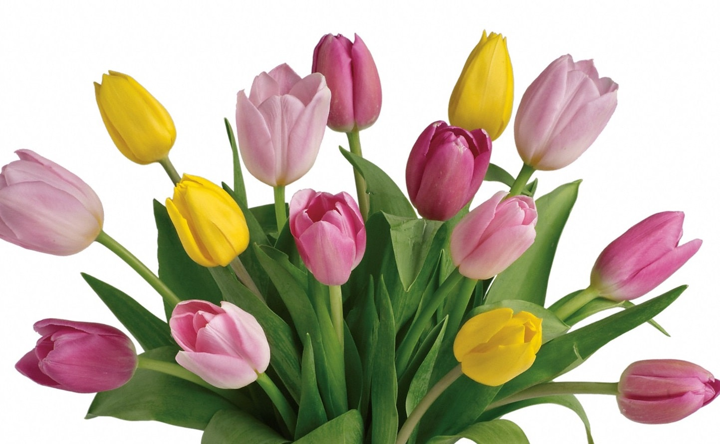 Tulip Bunch Cf12 05 Bunches Flower Co