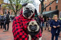 PHOTOS: Halloween Pet Parade and Costume Contest | Boston ...