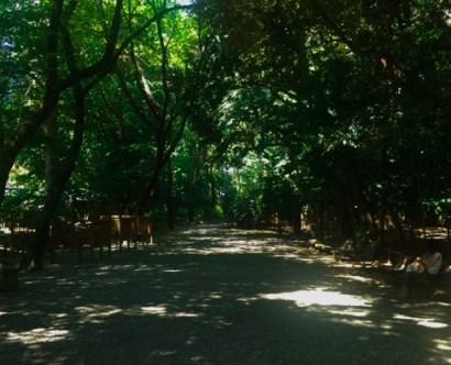 森へと続く道