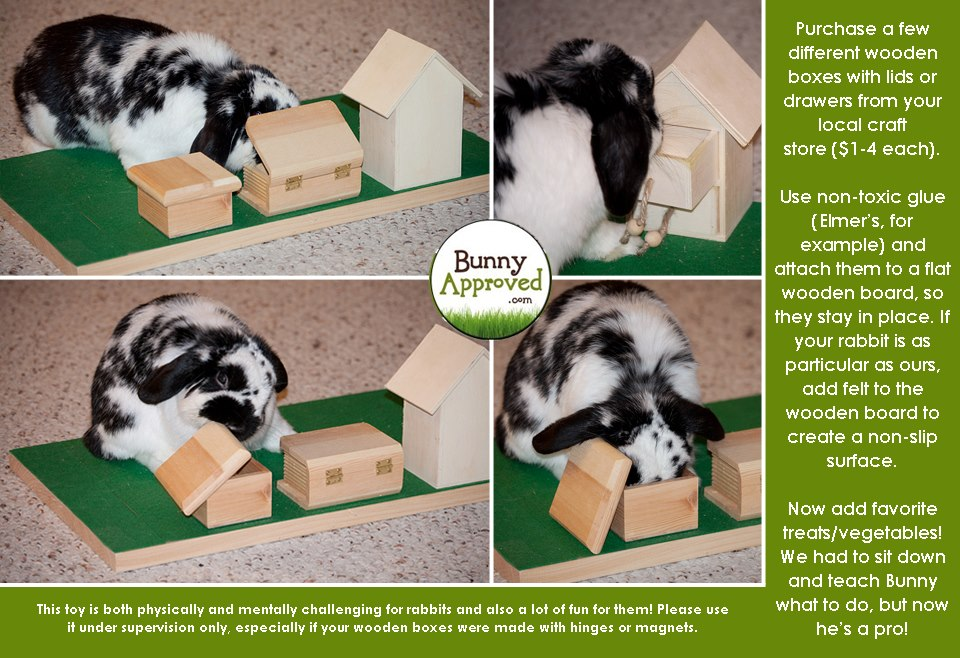 Bunny Logic 101 - Rabbits are Smart! - Bunny Approved - House Rabbit