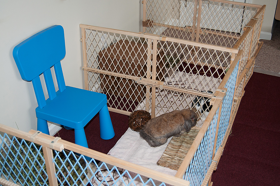 Baby Room Playpen Bonding Our Free Range House Rabbits Bunny Approved