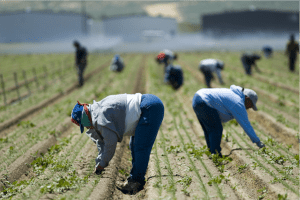 One of FEP's priorities focuses on protecting the rights of California migrant workers. | Photo Courtesy of Lauren Ornelas and the Food Empowerment Project