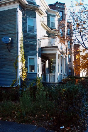 Overgrown plants and weeds fill the front of many unkept lawns in Allston. | Photo by Ashley Hansberry.