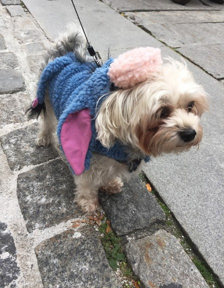 Maya, a morkie (yorkshire terrier and maltese), matches stepsister Ellie with her Eeyore costume. | Photo by Siena Tauber