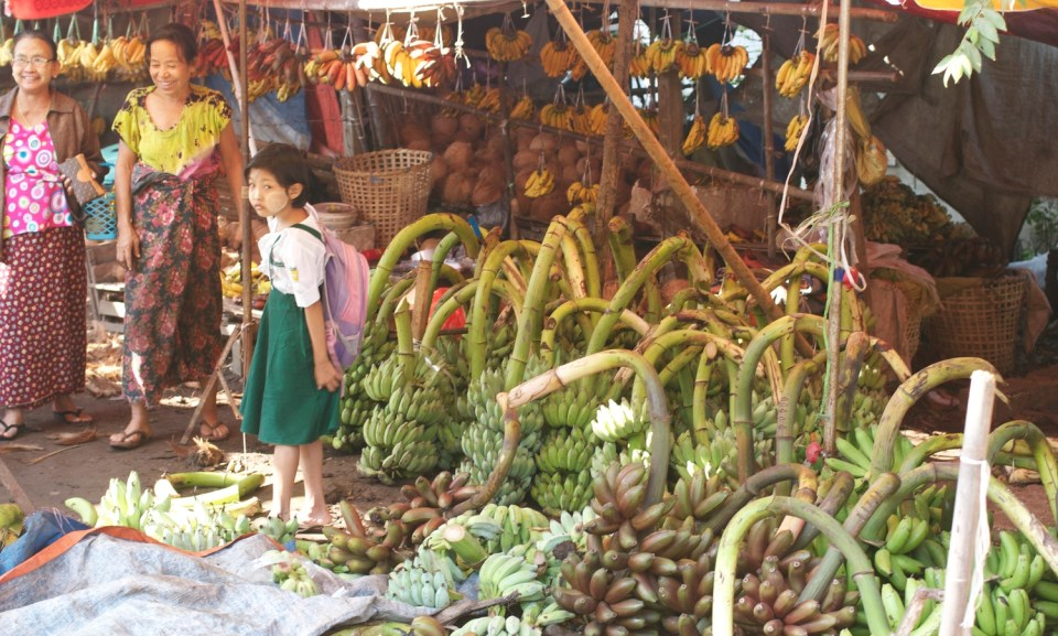 A large cluster of green bananas from a roadside stall such as this usually costs about $3.70 USD (As it has been said, there is always money in the banana stand.)