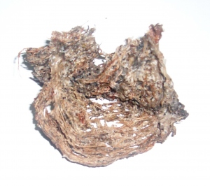Harga Terbaru Sarang Walet 2013 Main Sarang Burung Walet Pun Untung Minda Hartawan Sarang Burung Walit Pembeli Sarang Burung Wallitwalet Import Dan