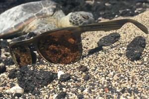 native turtle 1 (1)