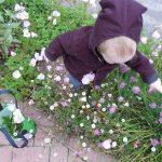 Bl choosing flowers to pick