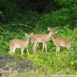 001 Wildlife Photo Album-BMIF