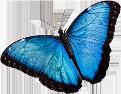 Wallpaper Monster Inc 3d The Butterfly Place Westford Massachusetts An Indoor