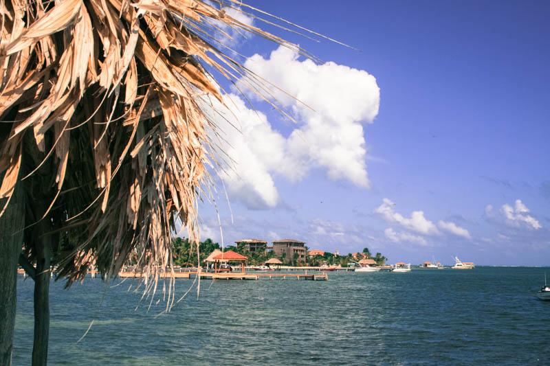 Belize Part 2   Butterlust