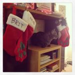 """Photo of the Day: Percy is hanging out by the """"chimney,"""" where our stockings have been hung with care."""