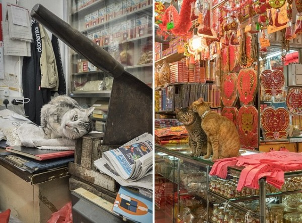 3C4B29F800000578-4125320-The_Hong_Kong_shop_cats_accompany_their_owners_day_in_day_out-a-21_1485278784418