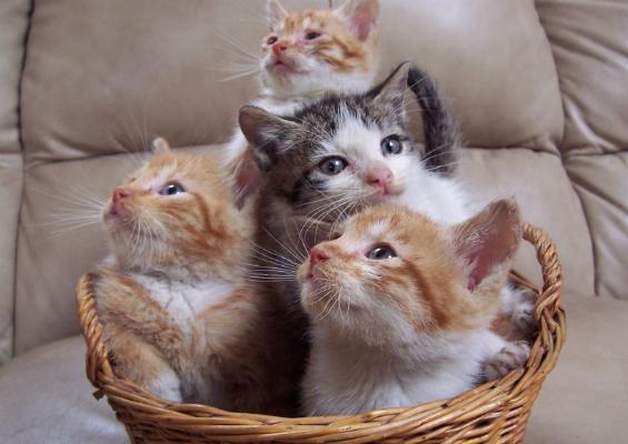 Kitties in a Basket