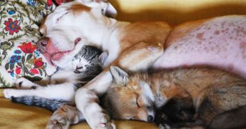 unlikely-sleeping-buddies-animal-friendship-55__605