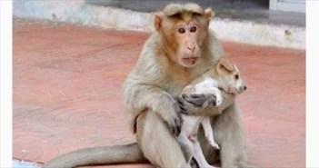monkey_R