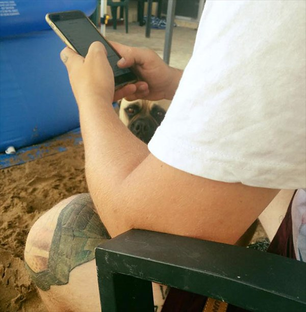 creepy-dog-stalks-owner-cyrus-bullmastiff-lauren-birney-30_R