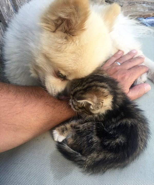 Kitten (8)_R