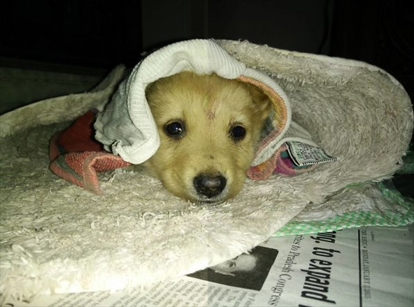 #12 So We Adopted An Abandoned Puppy_R