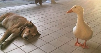 duck_R2