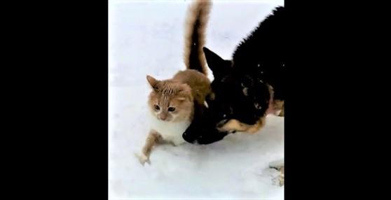 catdog_eye_r