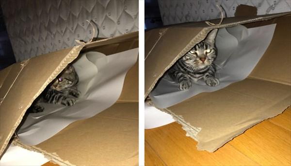 cat_r