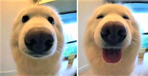 doggood_eye_r