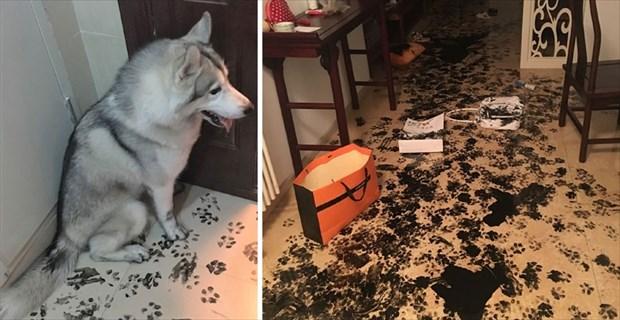 画像 「犬や猫に留守番を任せてはいけない理由」が一発でわかる写真 10選