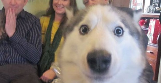 画像 シャッターチャンスに割り込んできた「憎めない犬たち」(笑) 10選